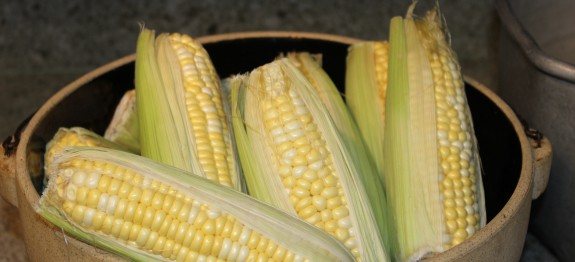 Corn for Boiling